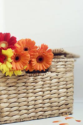 Gerbera In A Basket Poster