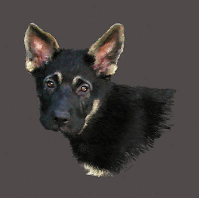 German Shepard Puppy Poster by Kathie Miller