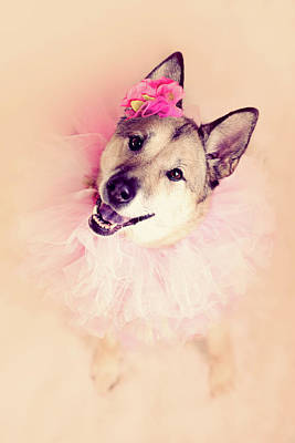 German Shepherd Mix Dog Dressed As Ballerina Poster