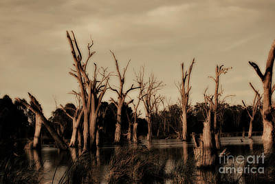 Poster featuring the photograph Ghostly Trees V2 by Douglas Barnard