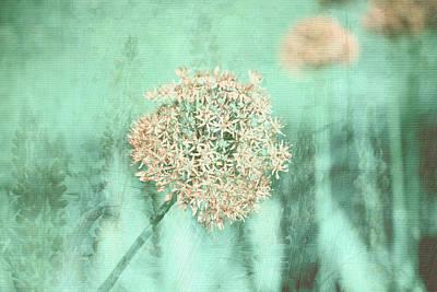 Giant Allium Montage Poster by Bonnie Bruno