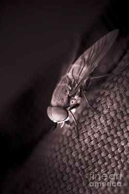 Giant March Fly Poster by Jorgo Photography - Wall Art Gallery