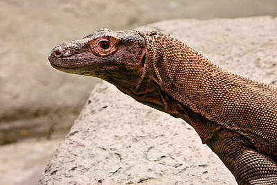 Giant Monitor Lizard 2 Poster