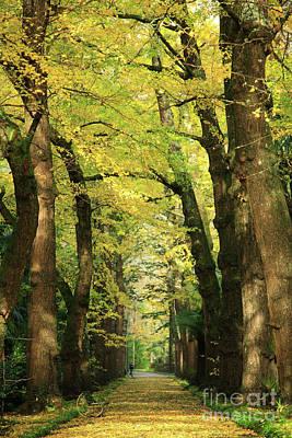 Ginkgo Biloba Trees Poster
