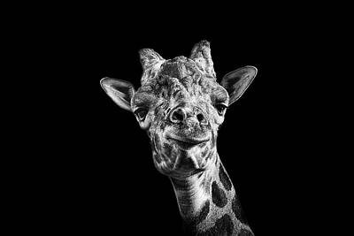 Giraffe In Black And White Poster by Malcolm MacGregor
