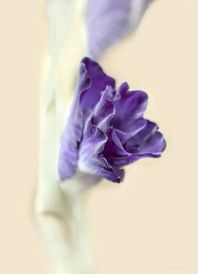 Gladiola Flower Beginnings Purple Poster by Jennie Marie Schell