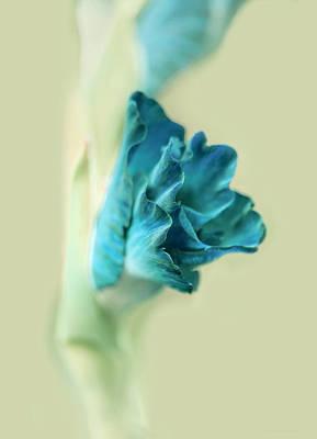 Gladiola Flower Beginnings Teal Poster by Jennie Marie Schell