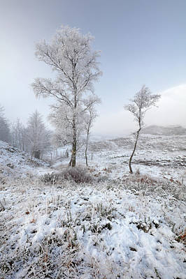 Poster featuring the photograph Glen Shiel Misty Winter Trees by Grant Glendinning