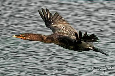 Gliding Cormorant Poster