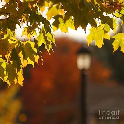 Glimpse Of Autumn Poster