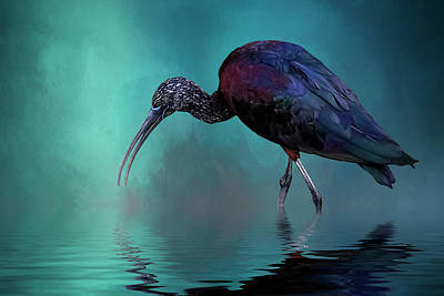 Glossy Ibis Looking For Breakfast Poster by Cyndy Doty