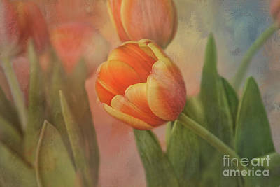 Glowing Tulip Poster by Joan Bertucci