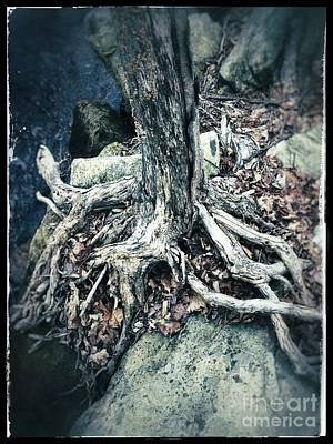 Gnarled Rooted Beauty Poster