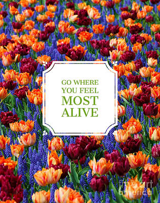 Go Where You Feel Most Alive Poster Poster by Edward Fielding