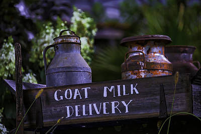 Goat Milk Delivery Poster by Garry Gay