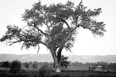 Goddess Tree 4 Poster