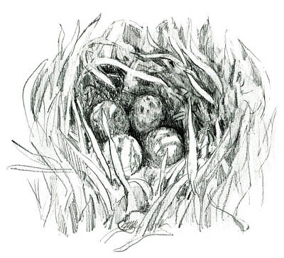Godwit Nest Poster