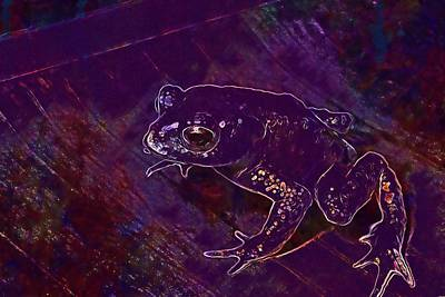 Gold Toad Toad Anuran Bufonidae  Poster