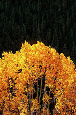 Golden Autumn Poster by Andrew Soundarajan