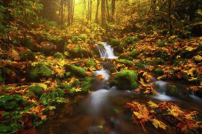 Golden Creek Cascade Poster