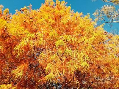 Golden Cypress  Poster by Scott D Van Osdol