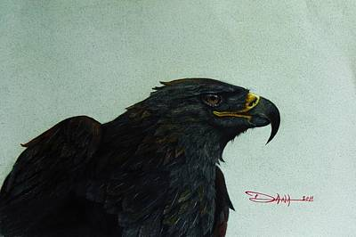 Golden Eagle- Head Study Poster