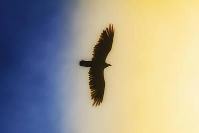 Golden Eagle Over Friday Harbor Poster