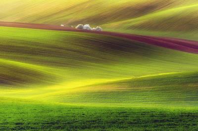 Golden Fields Poster by Piotr Krol (bax)