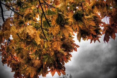 Golden Foliage  Poster