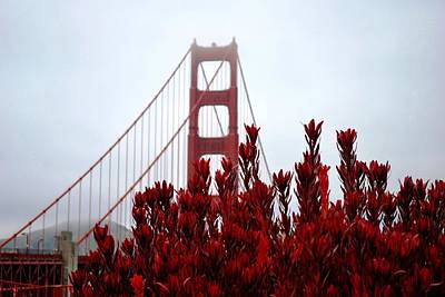 Golden Gate Bridge Red Flowers Poster