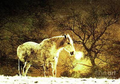 Golden Horse Poster by Callan Percy