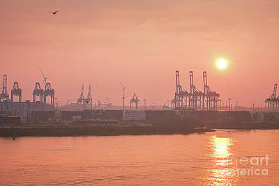 Golden Hour On The Elbe Poster