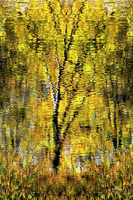 Golden Impressionist Tree Reflection Poster by Christina Rollo