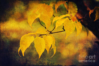 Golden Leaf Poster by Angela Doelling AD DESIGN Photo and PhotoArt