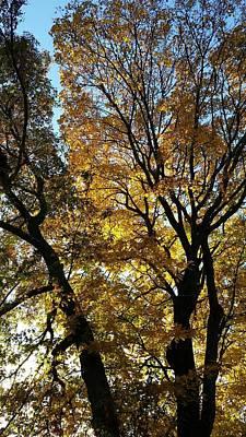 Golden Fall Poster