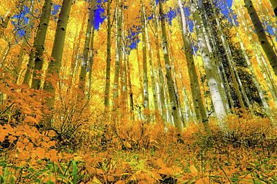 Golden Light Of The Aspens - Colorful Colorado - Aspen Trees Poster by Jason Politte