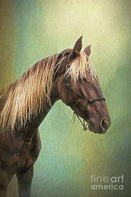 Golden Mane Poster by Sharon McConnell
