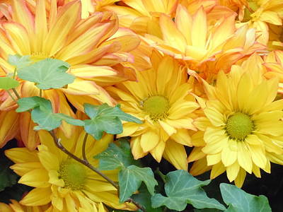 Golden Mums And Ivy Poster