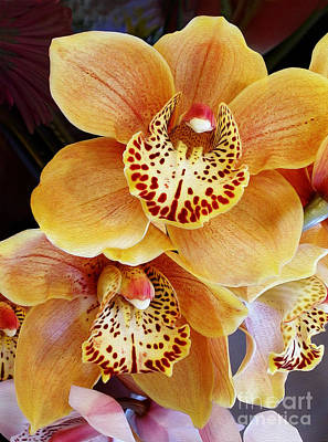 Golden Orchid Poster by Kaye Menner