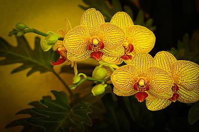 Golden Orchids Poster