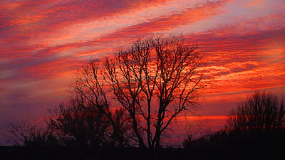 Golden Pink Sunset With Trees Poster