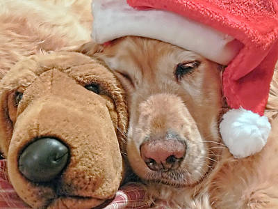 Golden Retriever Dog Santa Hat And Friend Poster