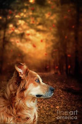 Golden Retriever Dreams Poster by Darren Fisher