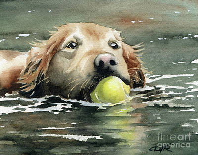 Golden Retriever Swimming Poster by David Rogers