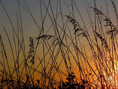 Poster featuring the photograph Golden Sea Oats by Terri Mills