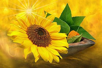 Golden Sunflower Poster