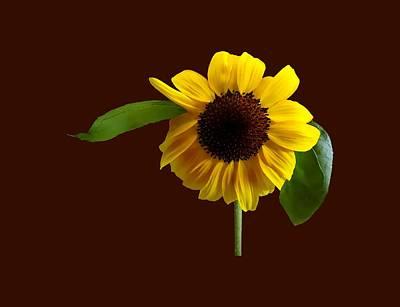 Golden Sunflower Poster by Susan Savad