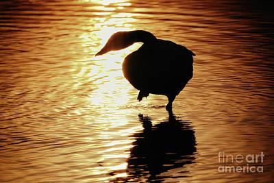 Golden Swan Poster by Tatsuya Atarashi