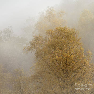 Golden Trees Poster by Rod McLean