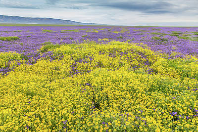 Poster featuring the photograph Goldfield And Phacelia by Marc Crumpler